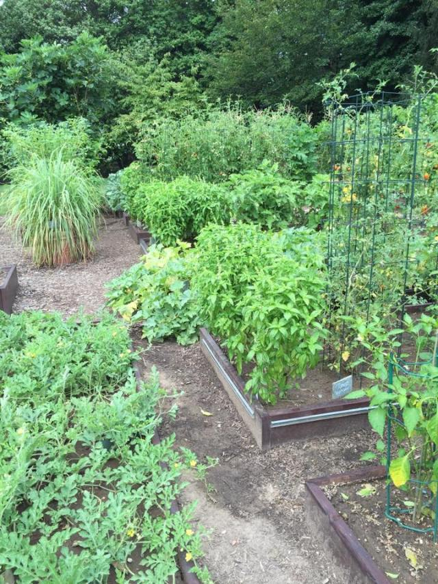 Garden (5)
