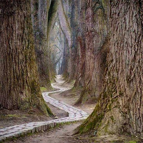 rumi-path